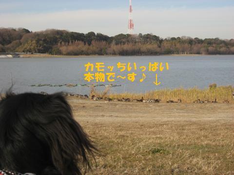 013_convert_20100127172616.jpg