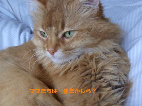013_convert_20100526115616.jpg