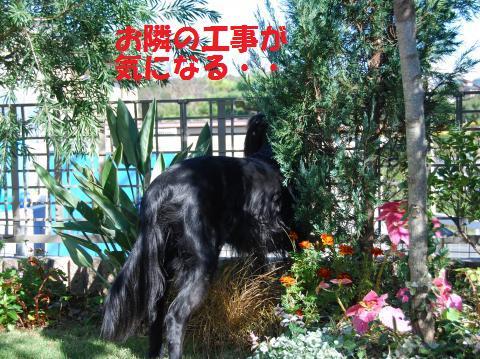 014_convert_20091119100202.jpg