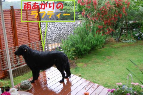 014_convert_20100520173515.jpg