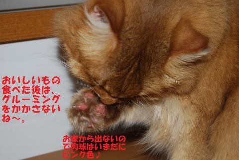 015_convert_20091110225807.jpg