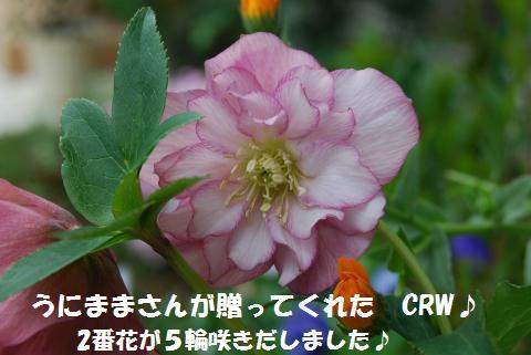 015_convert_20100414205259.jpg