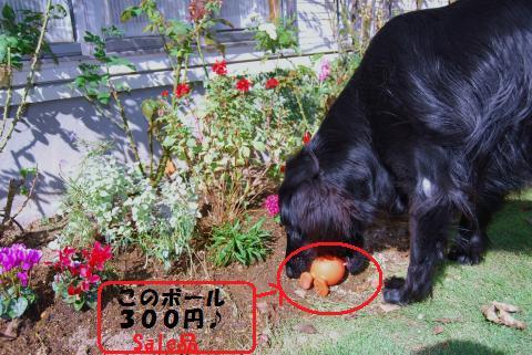 016_convert_20091027161950.jpg