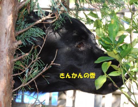 017_convert_20091119100328.jpg