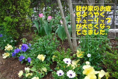 017_convert_20100409185343.jpg
