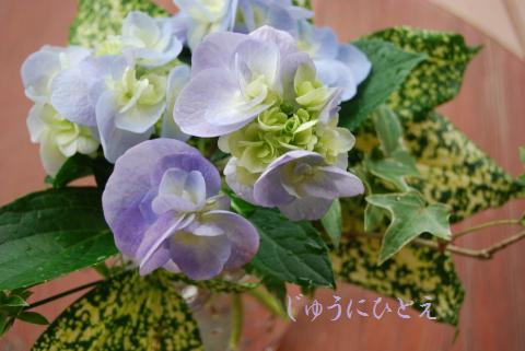 017_convert_20100625192832.jpg