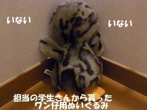 019_convert_20100527220956.jpg