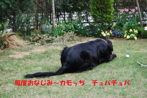 020_convert_20100414212320.jpg
