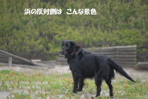 020_convert_20100505204320.jpg