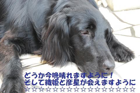024_convert_20100706233044.jpg