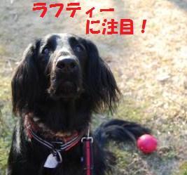 025_convert_20100121223739.jpg