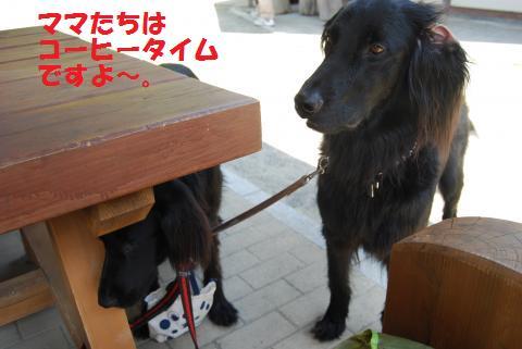 029_convert_20100430202015.jpg