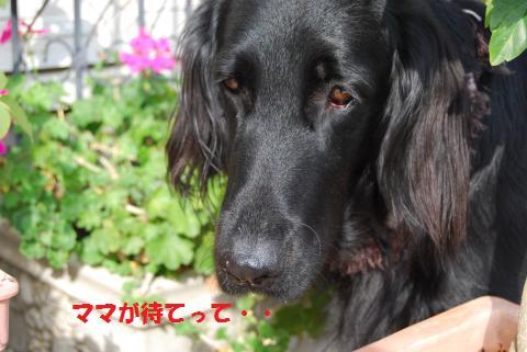 030_convert_20091210195258.jpg