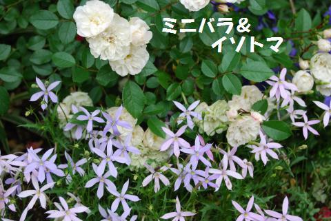 033_convert_20100520181740.jpg