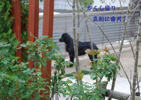 040_convert_20091112184359.jpg