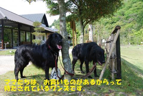 042_convert_20100430202944.jpg