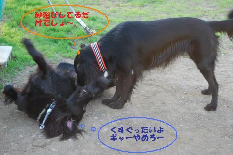 046_convert_20091104195747.jpg