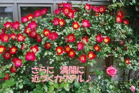 060_convert_20100505224743.jpg