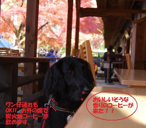 095_convert_20091130123429.jpg