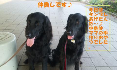 100428_1646+01_convert_20100429113614.jpg