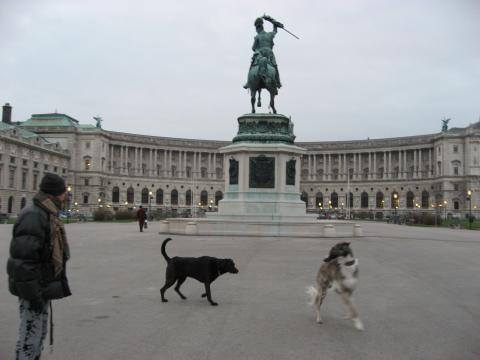 ウィーンの犬