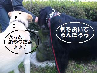 SH3E00070001.jpg