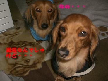 CIMG4645.jpg