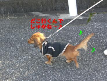 CIMG4740.jpg