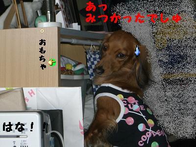 CIMG5105.jpg