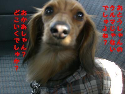 CIMG5141.jpg