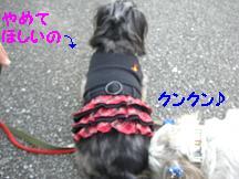 CIMG6689.jpg