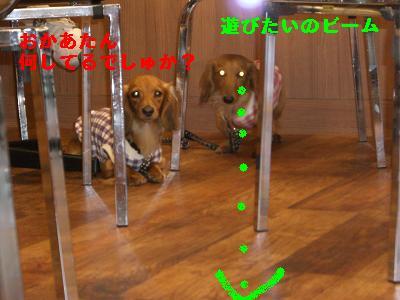 CIMG7241.jpg