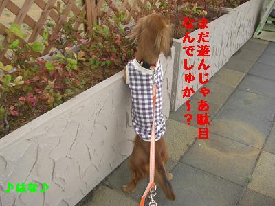 CIMG7402.jpg