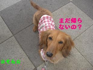 CIMG7420.jpg