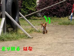 CIMG7454.jpg