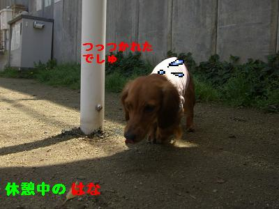 CIMG7467.jpg