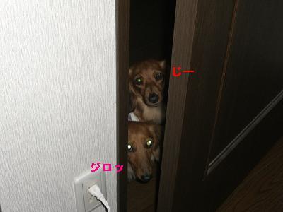 CIMG7612.jpg