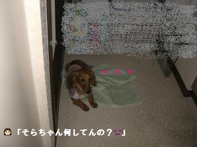 CIMG7655.jpg