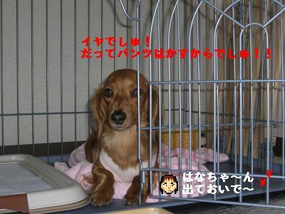 CIMG7781.jpg