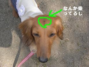 CIMG7815.jpg