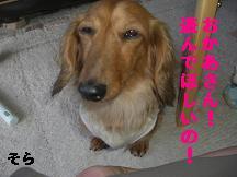 CIMG7866.jpg