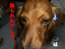 CIMG7976.jpg