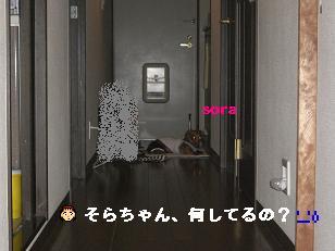 CIMG8066.jpg