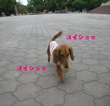 CIMG8162.jpg