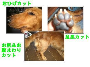 CIMG8192.jpg