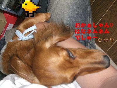 CIMG8223_20090627233114.jpg