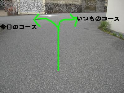 CIMG8281.jpg