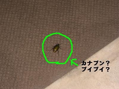 CIMG8469.jpg