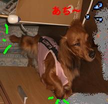 CIMG8513.jpg