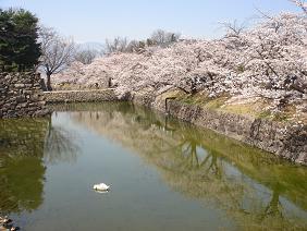 090410桜2